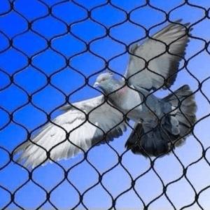 Servprag - Controle de pragas urbanas | Controle de Pombos e Morcegos
